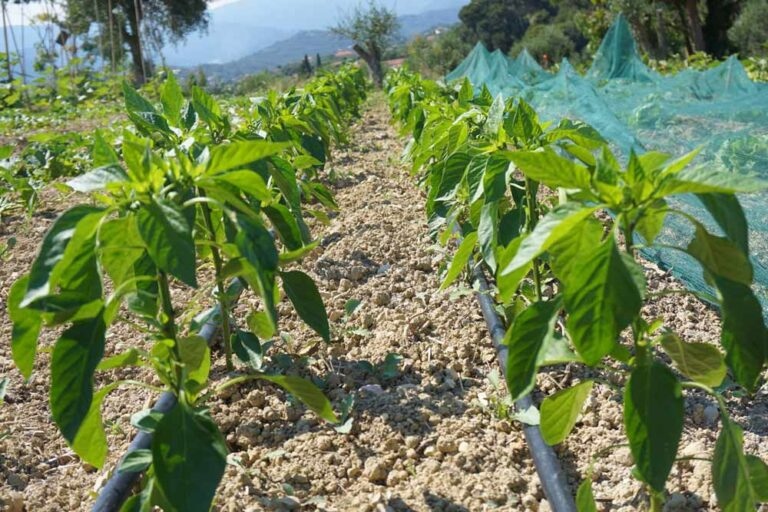 Über Organic Farming Italy San Martino Farm Feld
