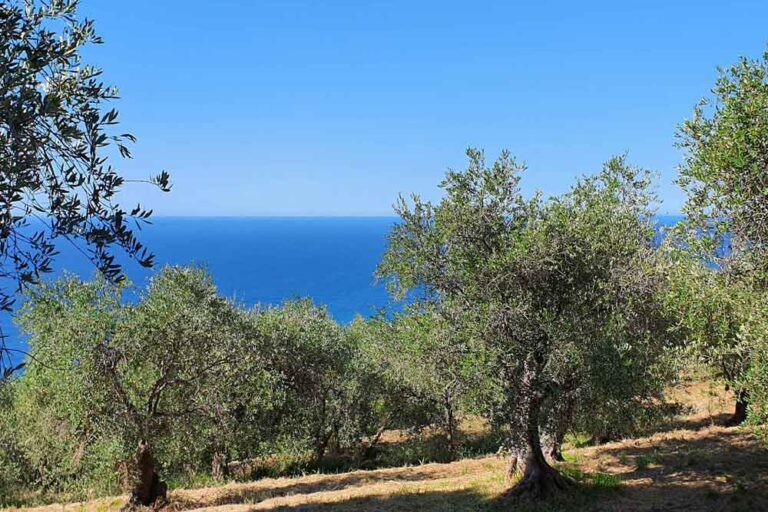 Patenschaft Olivenbaum biologisch Italien Meer