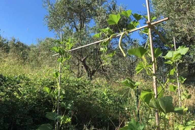 organische Landwirtschaft in Italien