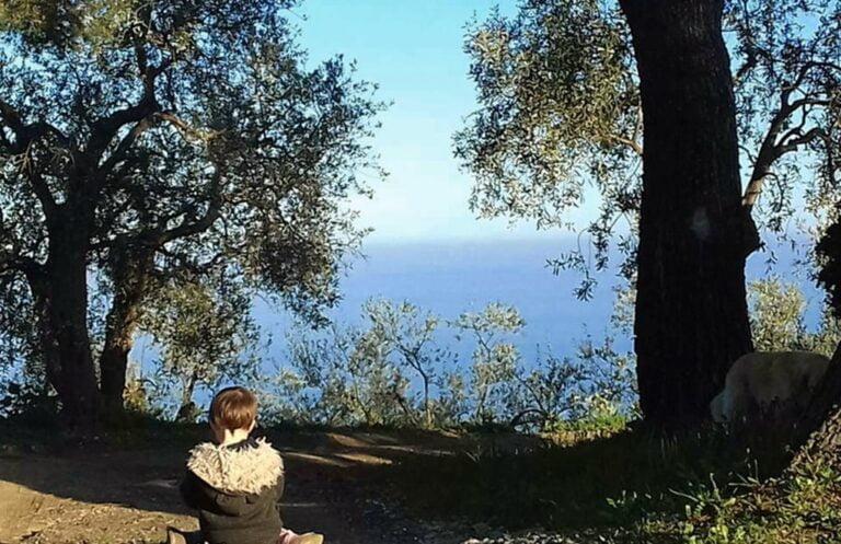 Olivenbaum adoptieren Sassolive