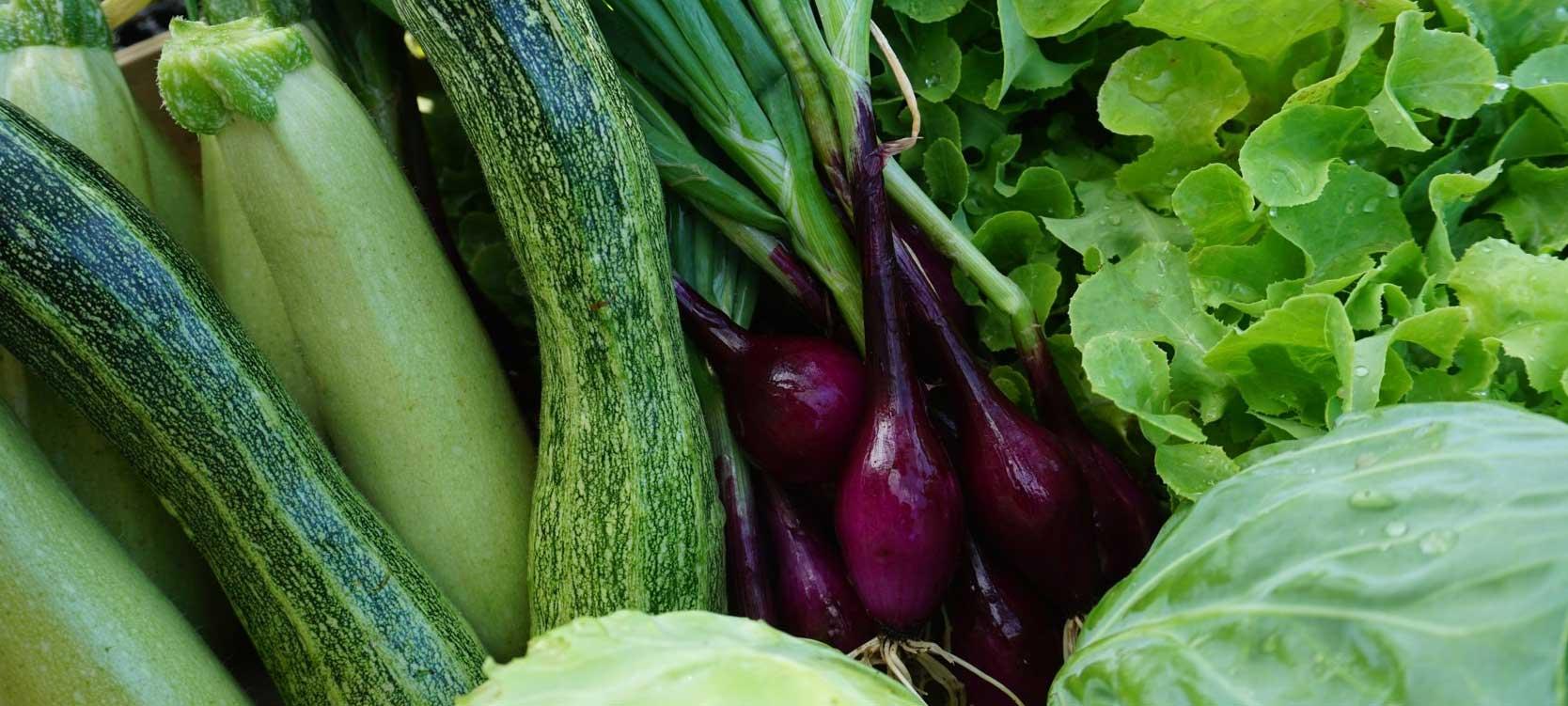 San Martino Organic Farm Vegetables